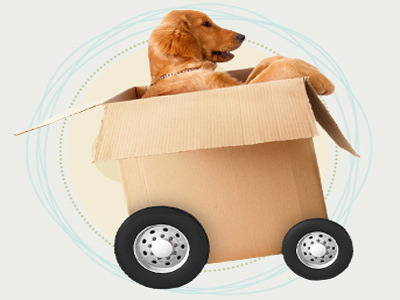 Movers Packers Service In Noida